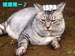 377iiyu-9.jpg