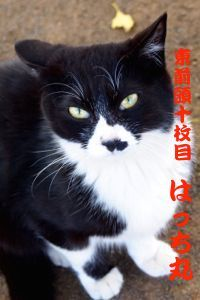 417sumo-2.jpg