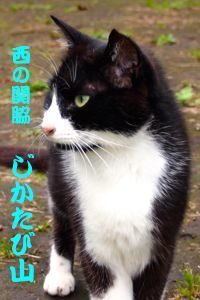 417sumo-3.jpg