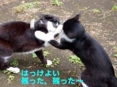 417sumo-5.jpg