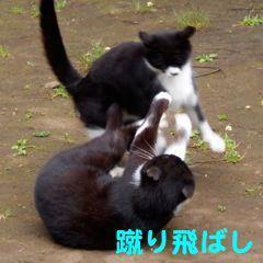 417sumo-6.jpg