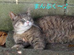 471doko-5.jpg